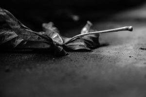 """Solitude,"" by Wendy Rosier"